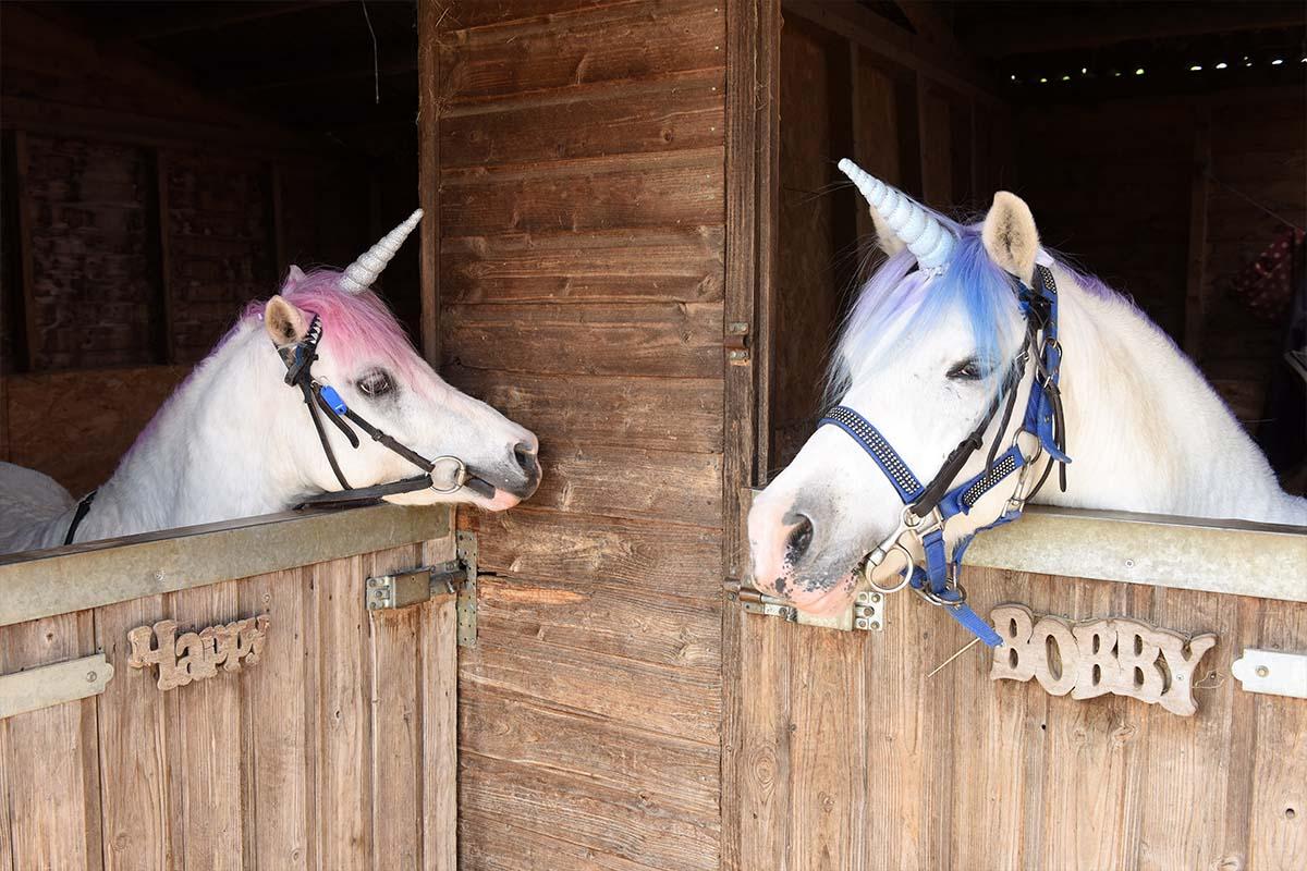 magical unicorn visits  u2013 pampered ponies